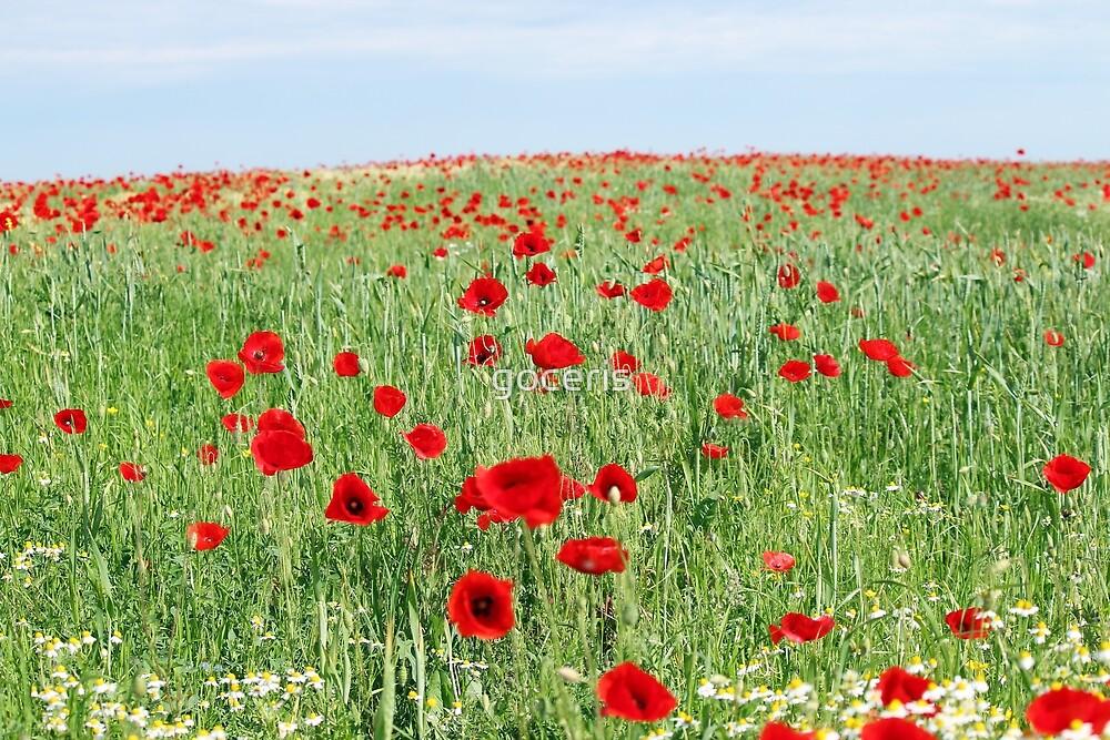 poppy flowers field landscape spring season by goceris
