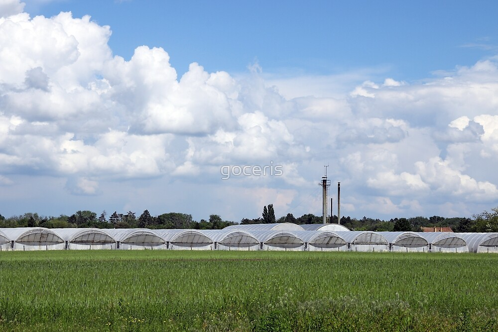 greenhouses on field agriculture industry by goceris