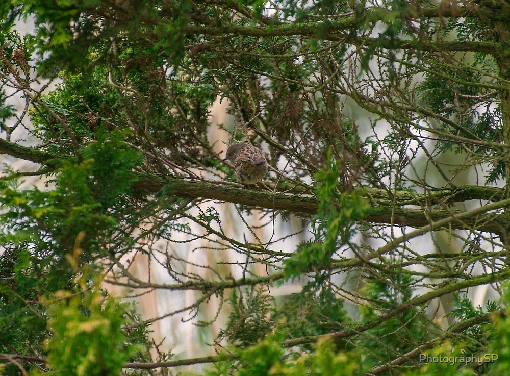 Bird in the Trees by PhotographySP