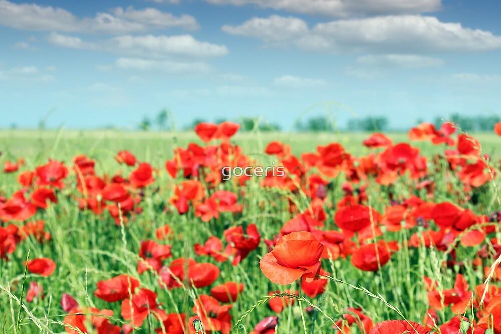red poppy flowers meadow landscape by goceris