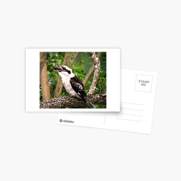 In the Baby's beak  Postcard