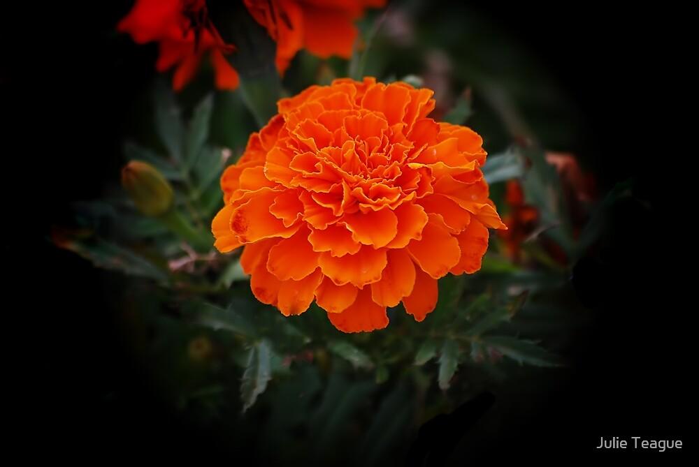 Bright Marigold by jooles1707