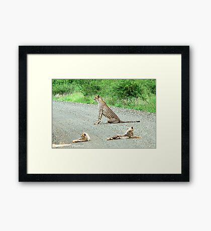 AROUND THE CORNER - THE CHEETAH MOTHER AND CUBS -  Acinonyx jabatus – Die Jagluiperd Framed Print