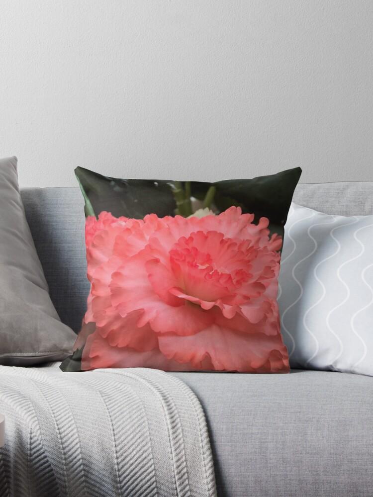 Beautiful Begonia of Bathurst Pink by jangelbud