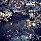 Tokyo blüht Originalfoto von shethatisnau