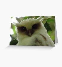 Crested Owl Juvenile Greeting Card