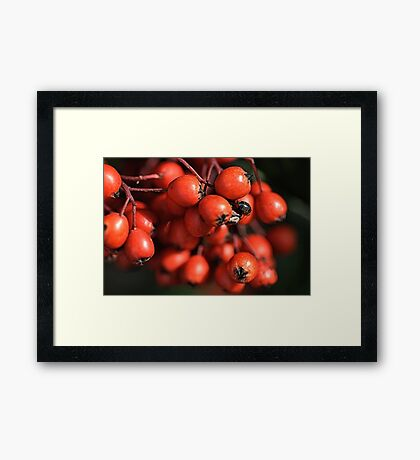With Nature Framed Print