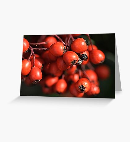 With Nature Greeting Card