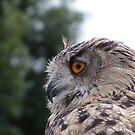 Eagle Owl by wahboasti