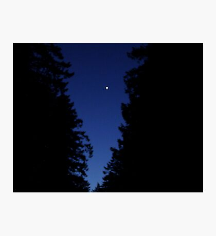 Venus In The Trees Photographic Print