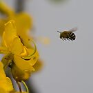 Flight of the Bumblebee by Gethin