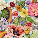 Montage of Summer Flower Heads (coloured pencil on paper) by Lynne Henderson