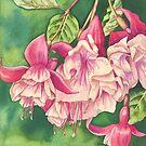 Fuchsia 'Snowburner' (watercolour on paper) by Lynne Henderson