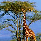 Giraffe and Weaver Tree by Nancy Barrett