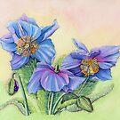 Himalayan Blue Poppy (gouache on paper) by Lynne Henderson