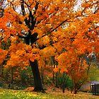 October Dusk by Nadya Johnson