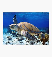 Green turtle Photographic Print