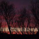 Pink Sunset by natnvinmom