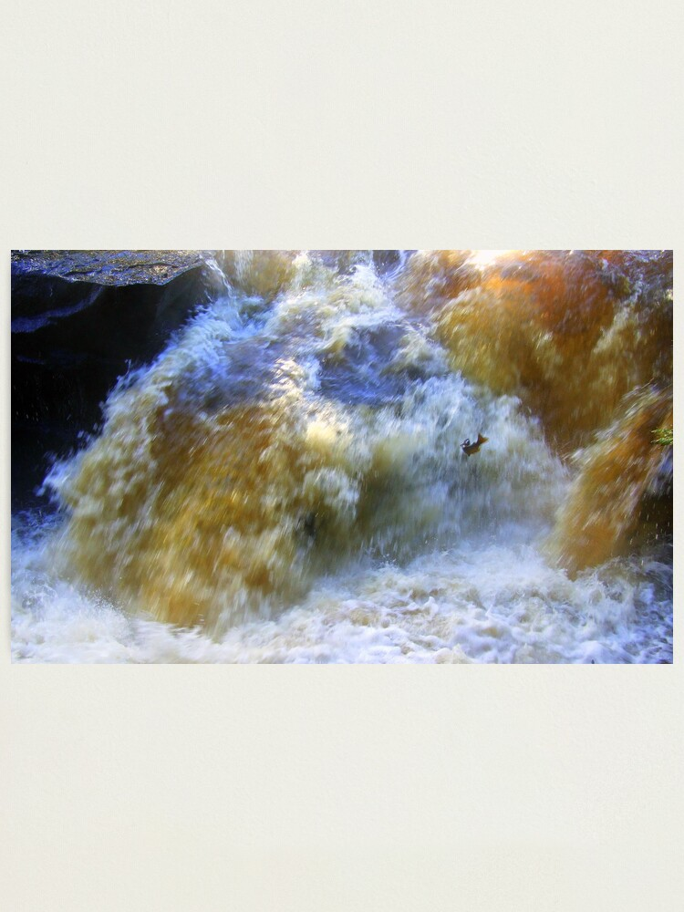 Alternate view of Ode to a Salmon Photographic Print