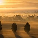 Misty Tree Sunrise by Matt Simner