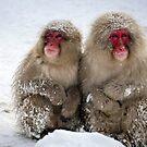 snow monkeys in japan by milena boeva