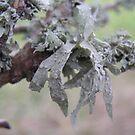 Lichen. by Eunice Atkins