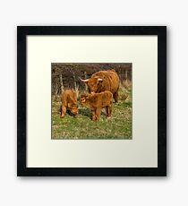 Highland Cow Family Framed Print