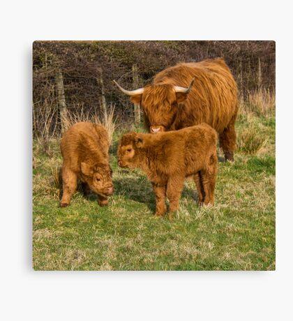 Highland Cow Family Canvas Print
