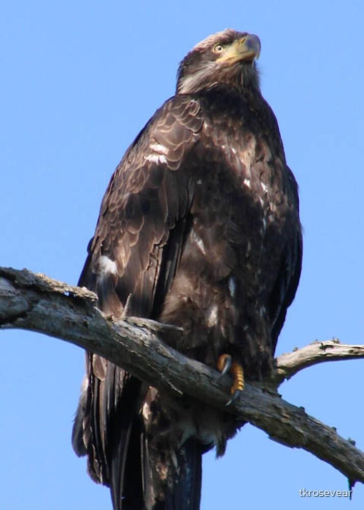 Odyssey Eagle by tkrosevear