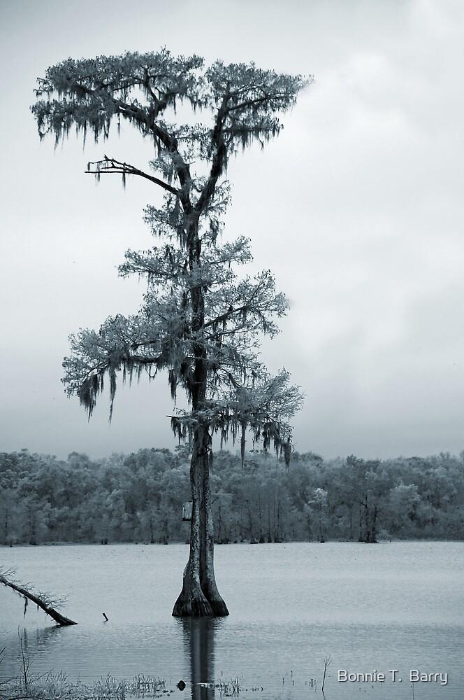Blue Cypress by Bonnie T.  Barry