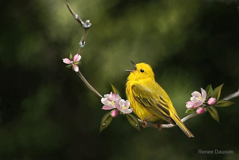 Yellow Warbler by Renee Dawson