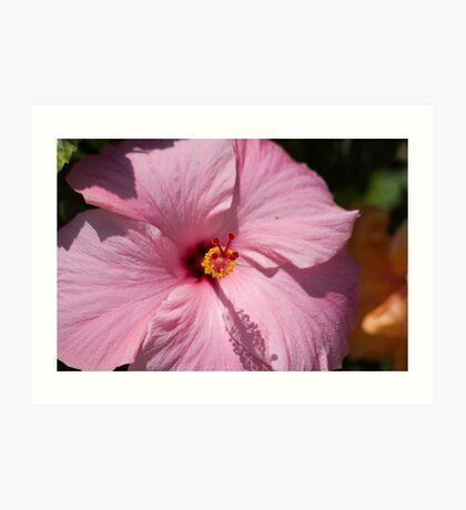 Princess Pink Hibiscus Art Print