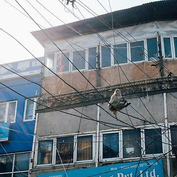 Monkey in the sky by strangerandfict