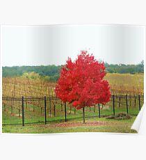 Wine Vineyard Poster