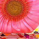 FROZEN (in sunshine) 45 by Cheri Sundra