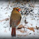 Cardinal, No Sin by Deb  Badt-Covell