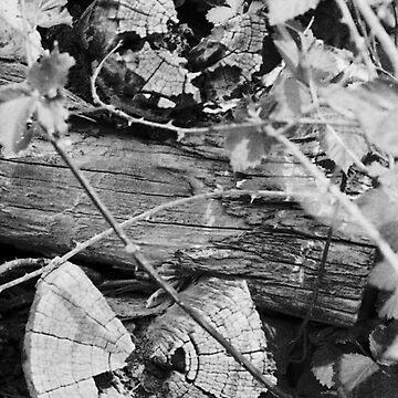 Latticed Wood by chrisjoy