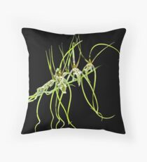 Orchid: Goldilocks (Brassia Edvah Loo) Throw Pillow