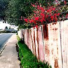 japonica and the rusty fence by elee