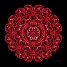 Consejo de las Rosas by Karen Casey-Smith