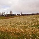Village scenery by Antanas