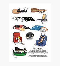 Greyhound Glossary: Bed Fail. A Redbubble exclusive design Photographic Print