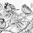 House Sparrows on Hawthorn (pen and ink on paper) by Lynne Henderson