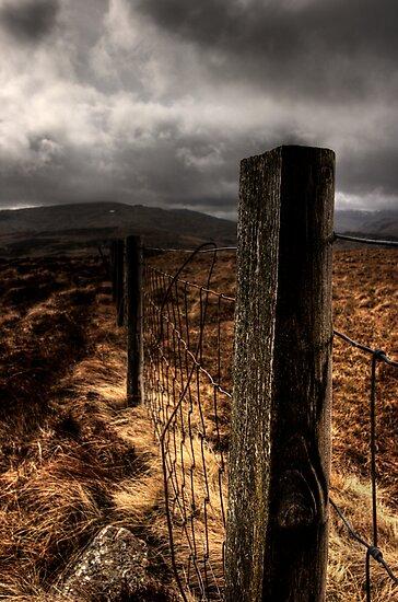 Fence by David Robinson
