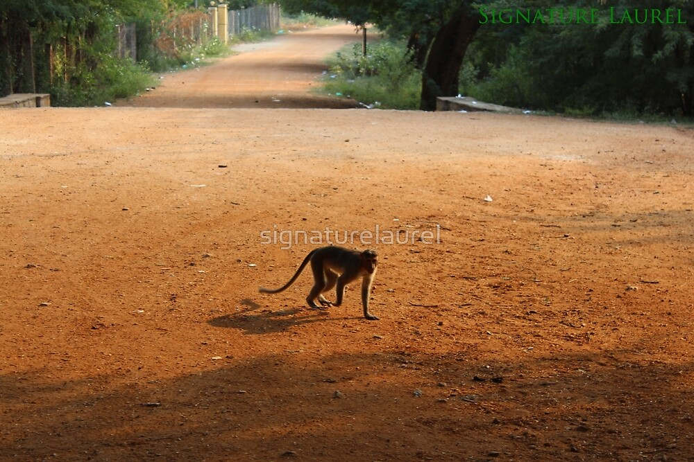 Monkey in India by signaturelaurel