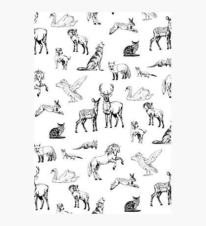 Animals Impression photo