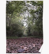 Fallen Leaves Trail Walk Poster