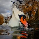 Swan & Birds by Patricia Jacobs DPAGB BPE4