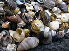 Shells and more shells by mark7b