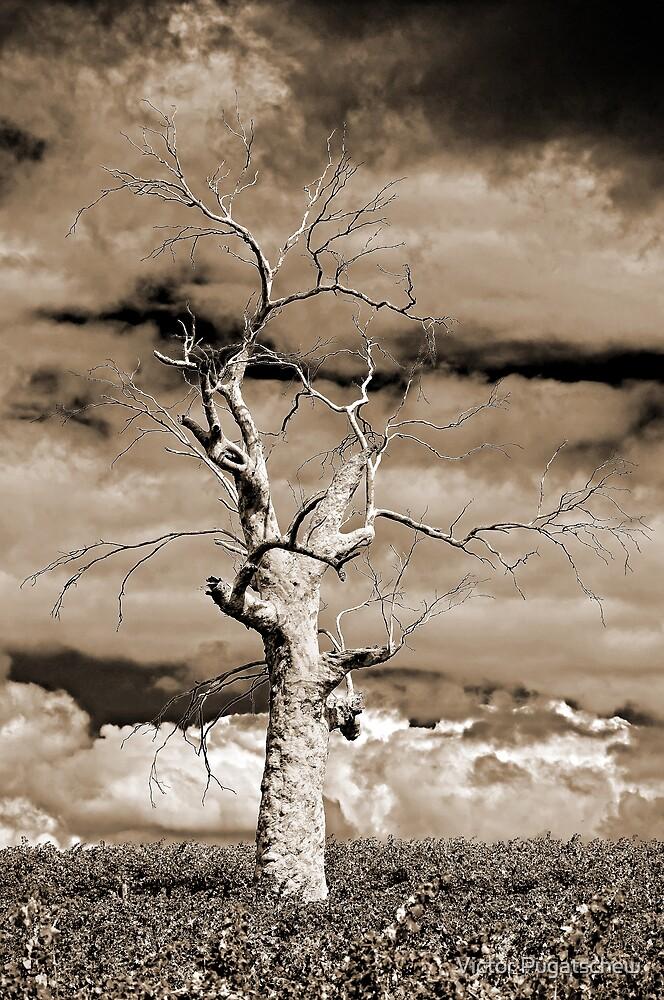 Sepiatree. by Victor Pugatschew